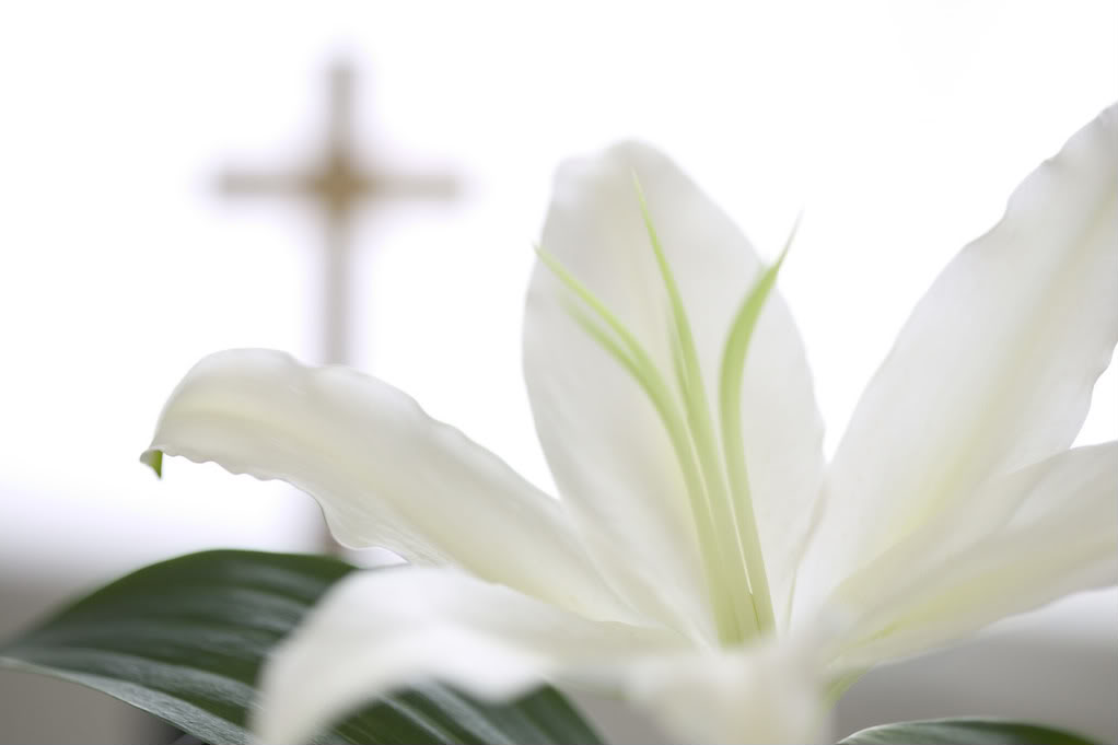 Easter Lily BackgroundW